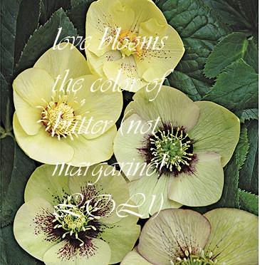 Helleborus mellow yellow
