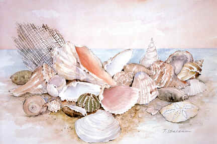 Seashells72