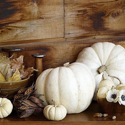 Pumpkin-white-l